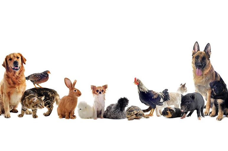 visie rond huisdieren in Dijlehof